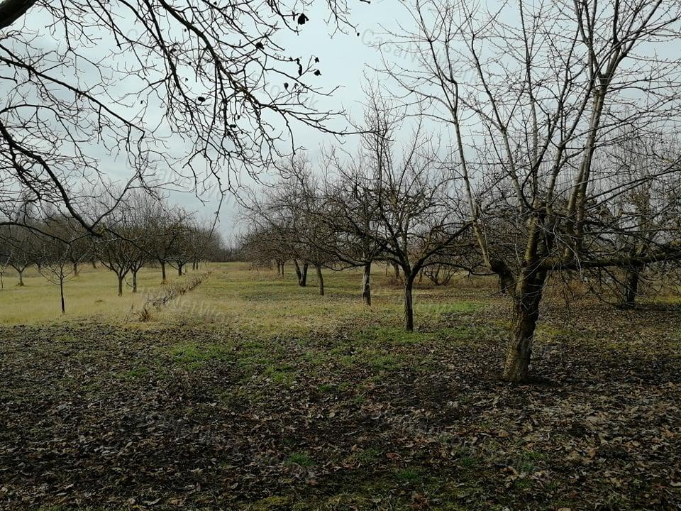 Eladó kert, gyümölcsös, Jász-Nagykun-Szolnok megye, Tiszaföldvár - sz.: 155802607 - CasaNetWork.hu