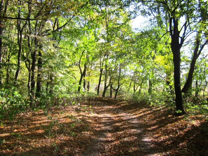 Eladó erdő, Veszprém megye, Jásd - sz.: 156201144 - CasaNetWork.hu