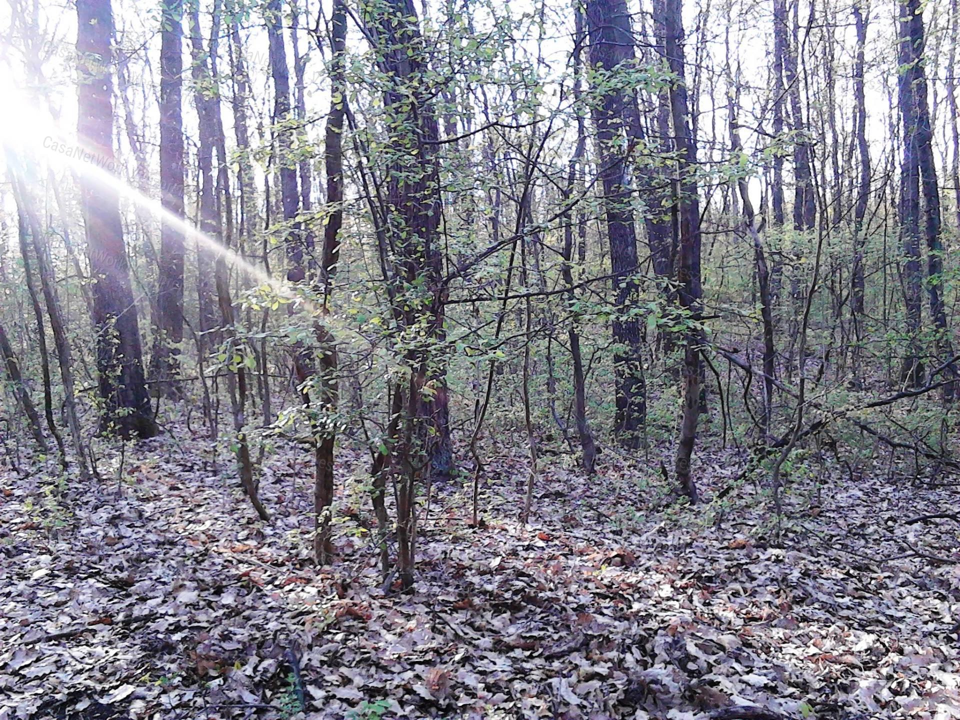 Eladó erdő, Veszprém megye, Nemesvámos - sz.: 156201206 - CasaNetWork.hu