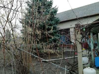 Eladó családi ház - Tiszaföldvár / 20. kép