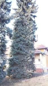 Eladó családi ház - Tiszaföldvár / 12. kép