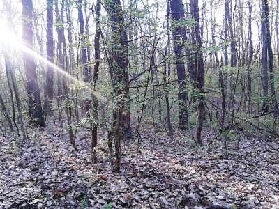 Eladó erdő - Nemesvámos / 1. kép