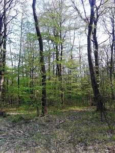 Eladó erdő - Nemesvámos / 3. kép