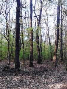 Eladó erdő - Nemesvámos / 2. kép
