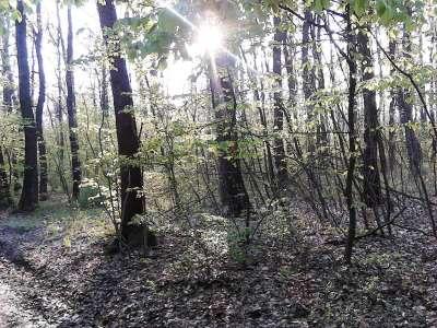 Eladó erdő - Nemesvámos / 5. kép