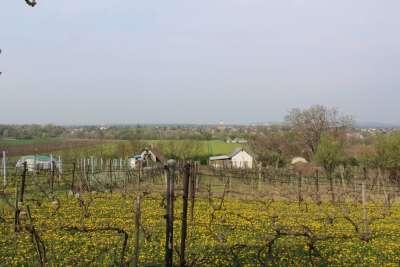 Eladó kert, gyümölcsös - Berhida / 5. kép