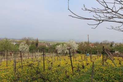 Eladó kert, gyümölcsös - Berhida / 4. kép