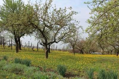 Eladó kert, gyümölcsös - Berhida / 2. kép