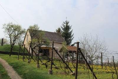 Szépen karbantartott külterület, szőlő eladó !