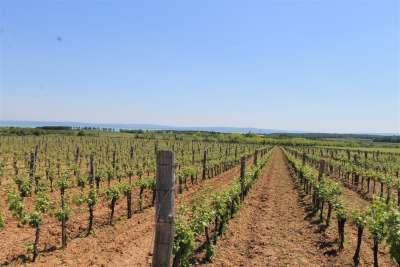 Eladó mezőgazdasági terület - Tagyon / 1. kép