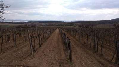 Eladó szőlőterület Zánkán