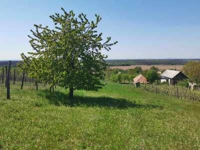 Eladó kert, gyümölcsös - Somlószőlős (Somló-hegy) / 1. kép