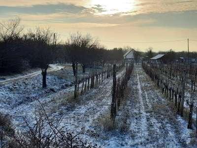 Eladó mezőgazdasági terület - Balatonudvari / 1. kép