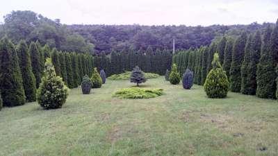 Parkosított kert