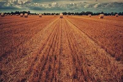 Eladó mezőgazdasági terület - Sarkadkeresztúr / 1. kép